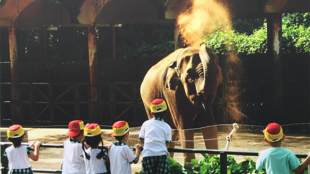 Thảo Cầm Viên Sài Gòn mở cửa miễn phí sân chơi nước